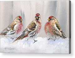 Crossbill Acrylic Prints