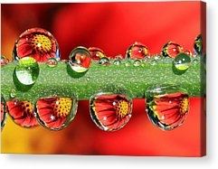 Water Drop Acrylic Prints