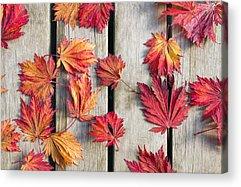 Fallen Leaf Photographs Acrylic Prints
