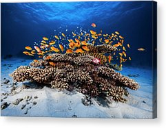 Reef Acrylic Prints