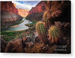 Meandering Acrylic Prints