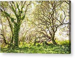 Oak Photographs Acrylic Prints