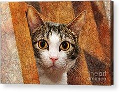 Andee Design Animal Acrylic Prints