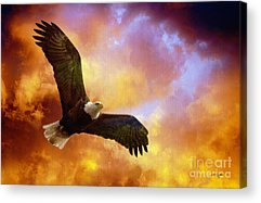 Bald Eagle Acrylic Prints