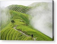 Rice Acrylic Prints