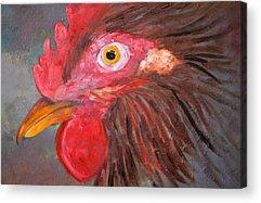 Chicken Portrait Acrylic Prints
