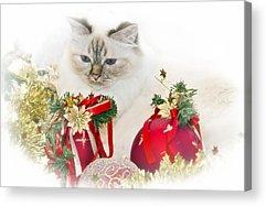 Felidae Acrylic Prints