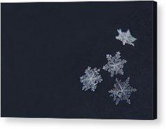 Snowflake Acrylic Prints