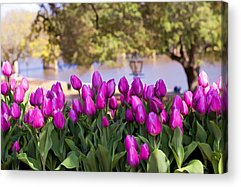 Natchitoches Acrylic Prints