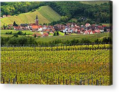 Vineyards Of Alsace Photographs Acrylic Prints