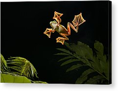 Abah River Flying Frog Acrylic Prints
