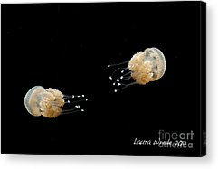 Jelly Fish With Dots Acrylic Prints