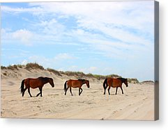 Sand Dunes Mixed Media Acrylic Prints