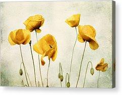 Yellow Ochre Acrylic Prints