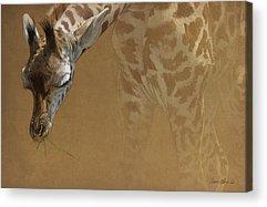 Giraffes Acrylic Prints