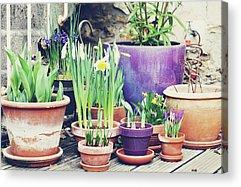 Sunlight On Pots Photographs Acrylic Prints