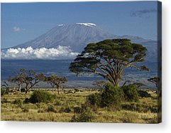 Kilimanjaro Acrylic Prints