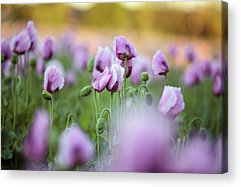 Blooming Acrylic Prints