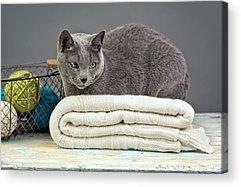 Pastel Pet Portrait Acrylic Prints