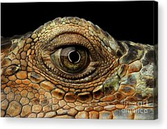 Reptile Acrylic Prints
