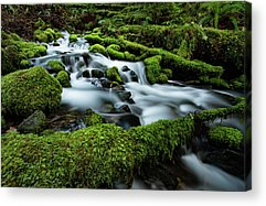 Olympic National Park Acrylic Prints