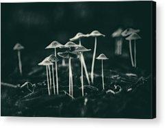 Toadstools Acrylic Prints