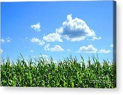 Field Digital Art Acrylic Prints