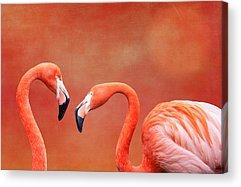 Pink Flamingo Acrylic Prints