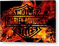 Harley Acrylic Prints
