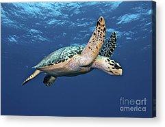 Ocean Images Acrylic Prints