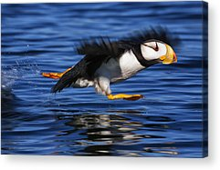 Alaska Photographs Acrylic Prints