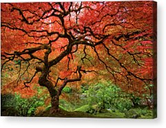 Red Leaves Acrylic Prints