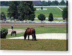 Kentucky Horse Park Digital Art Acrylic Prints