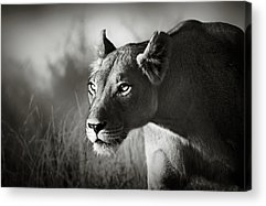 Cat Eyes Acrylic Prints