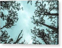 Canopy Acrylic Prints