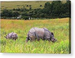 One Horned Rhino Acrylic Prints