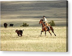 Working Cowboy Photographs Acrylic Prints