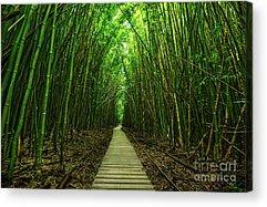 Bamboo Acrylic Prints