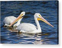 Pelican Island National Wildlife Refuge Acrylic Prints
