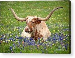Texas Wildflowers Acrylic Prints