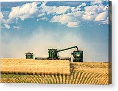 Harvest Photographs Acrylic Prints