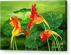 Nasturtiums Acrylic Prints