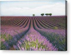 Flower Photographs Acrylic Prints
