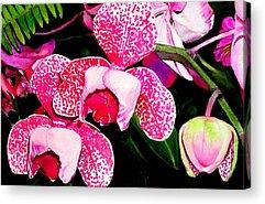 Maureen Hunt Piccirillo Acrylic Prints