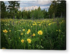 Designs Similar to Wildflower Meadow In The Tetons