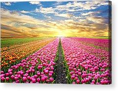 Florist Acrylic Prints