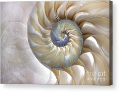 Beauty Of Nature Acrylic Prints