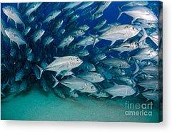 Ecosystem Acrylic Prints