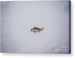 Designs Similar to Dead Fish Laying On Snow