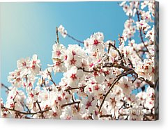 Aromatherapy Acrylic Prints